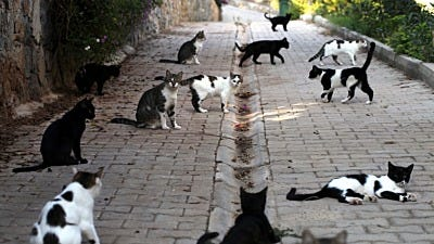 3 Words for Beating Cat Overpopulation: Trap, Neuter, Return