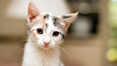 The Benefits of Feral Cat TNR Programs vs. Euthanasia