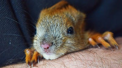 Can You Keep Squirrels As Pets?