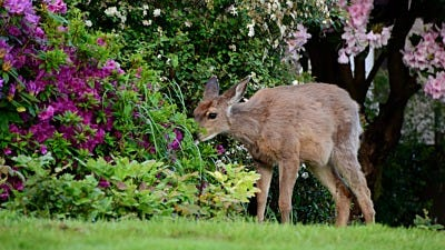 Deer Proof Flowers … Don't Put all your Flowers in One Basket