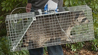Expert Tips for First-Time Animal Trappers