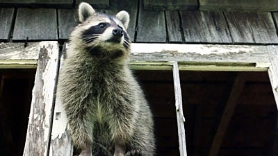 How to Keep Wild Animals Out of the Garage