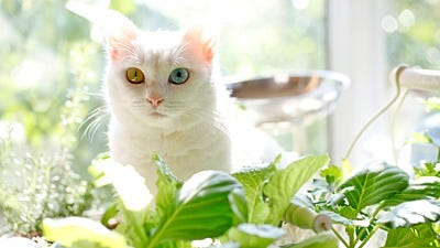 Indoor Cats and House Plants - A Bad Mix