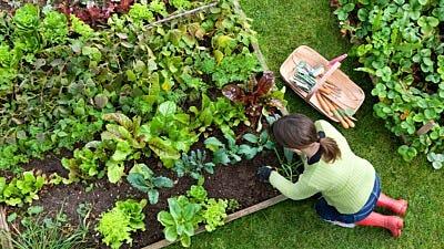 Organic Wild Animal Control: Integrated Pest Management