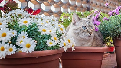 Reclaim your Flowerbed with Plants that Deter Cats
