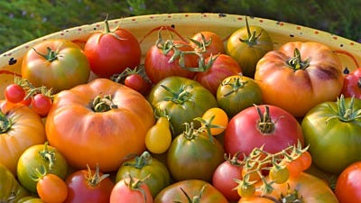 What to Do with a Surplus of Tomatoes from Your Garden