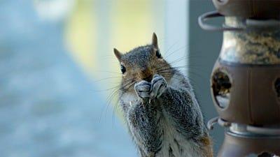 Attract Birds, Not Squirrels!