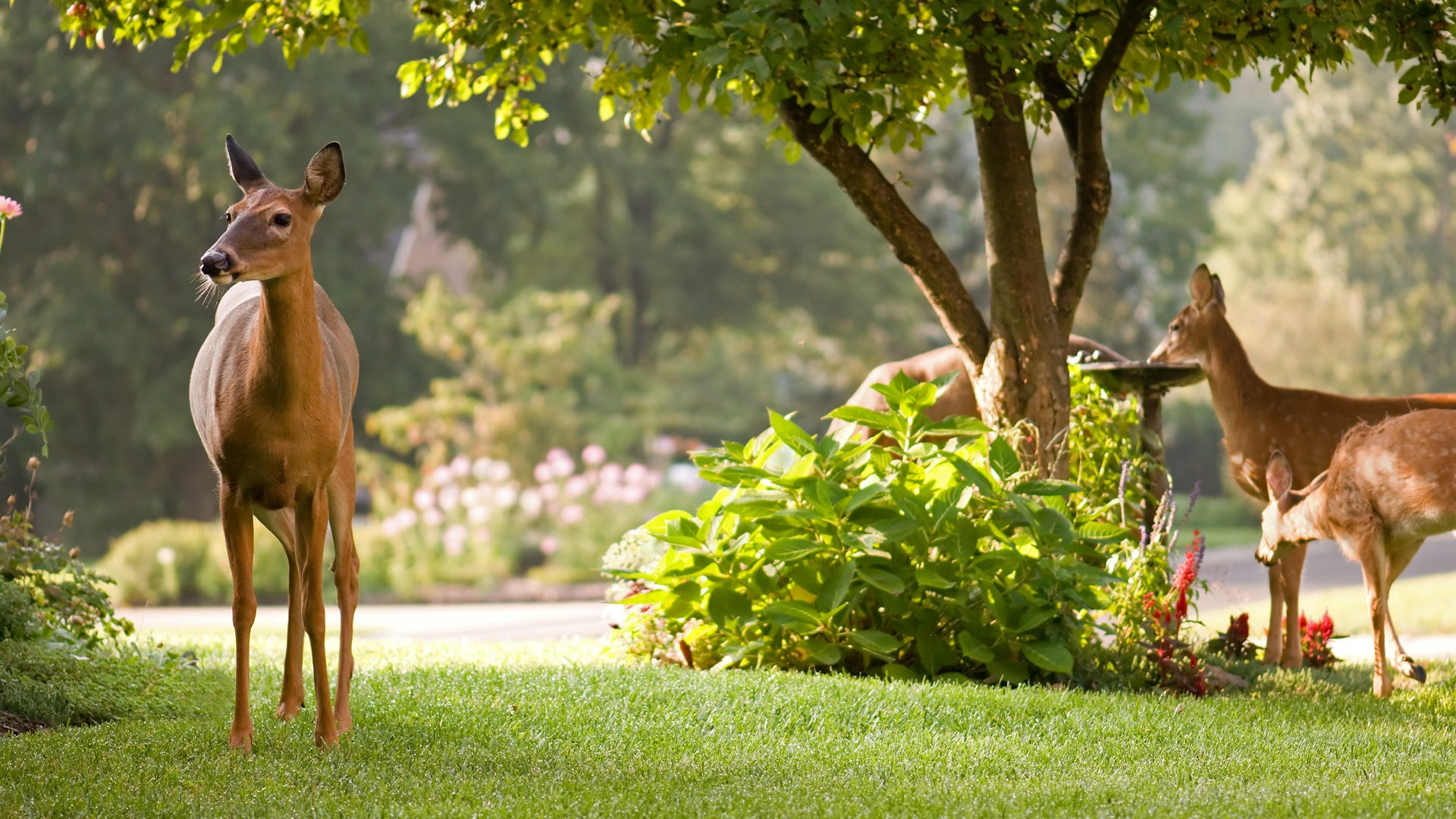 Certifying Your Yard or Garden as a Wildlife Habitat