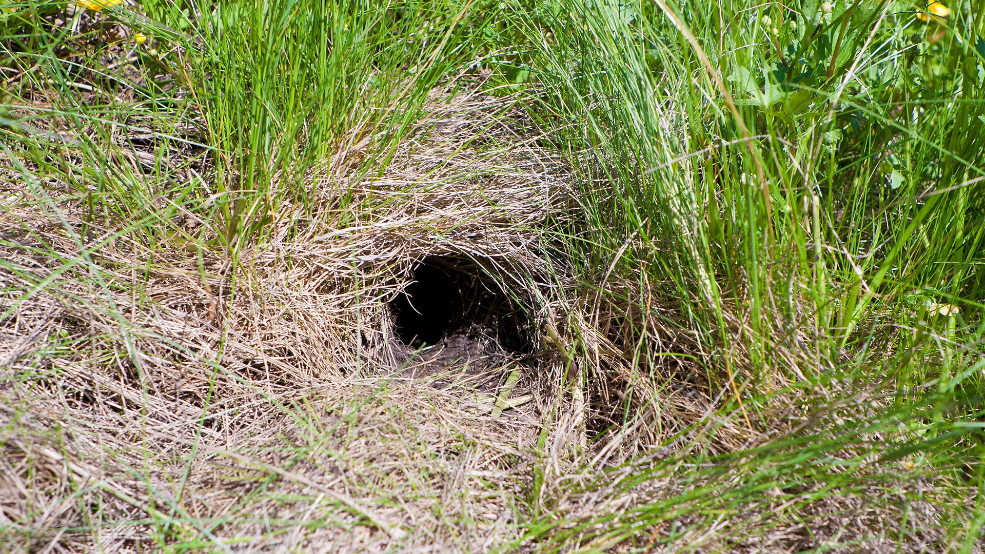 Do You Need to Hide or Camouflage a Trap?