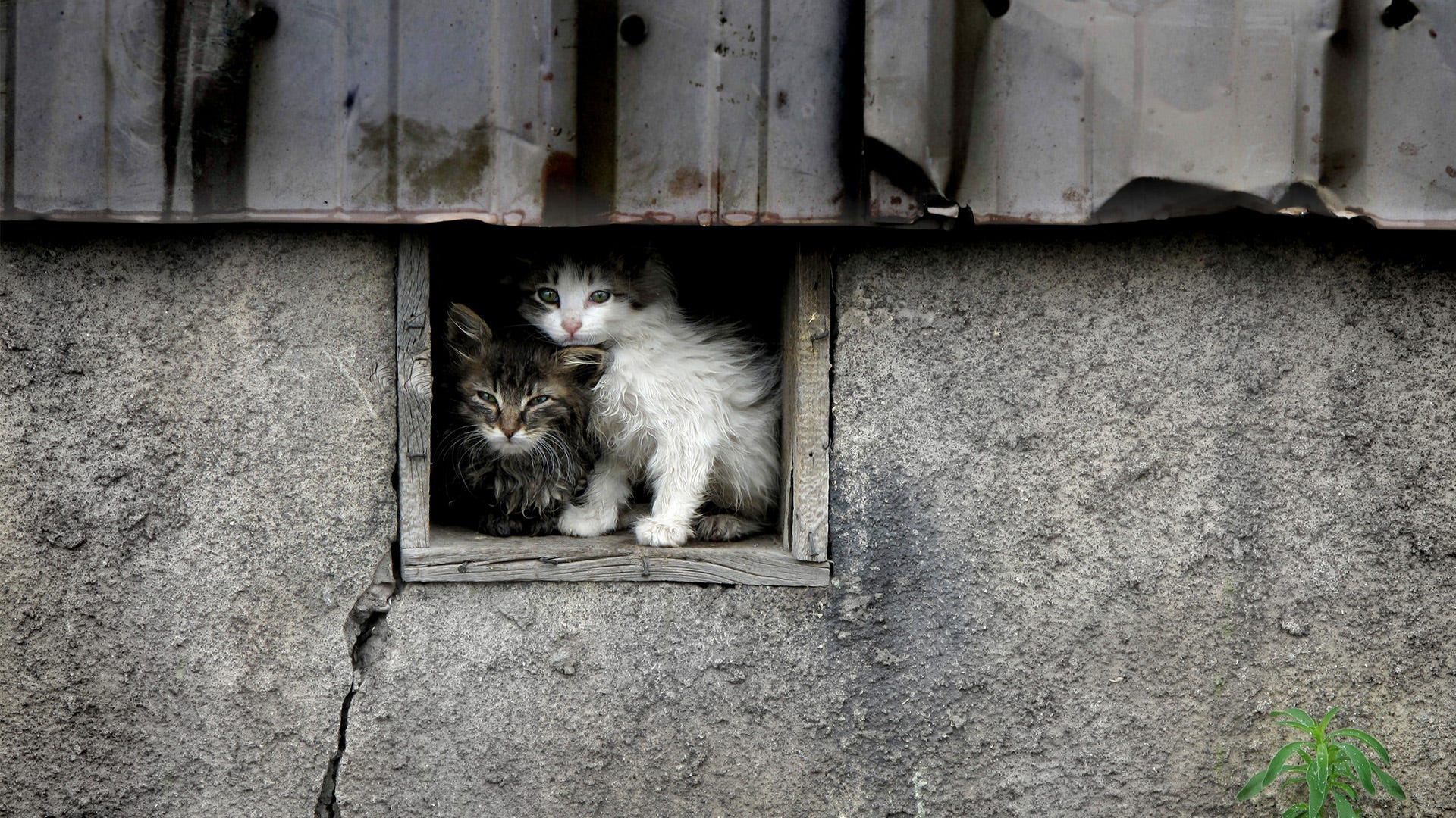 Feral Cat Trapping Tips