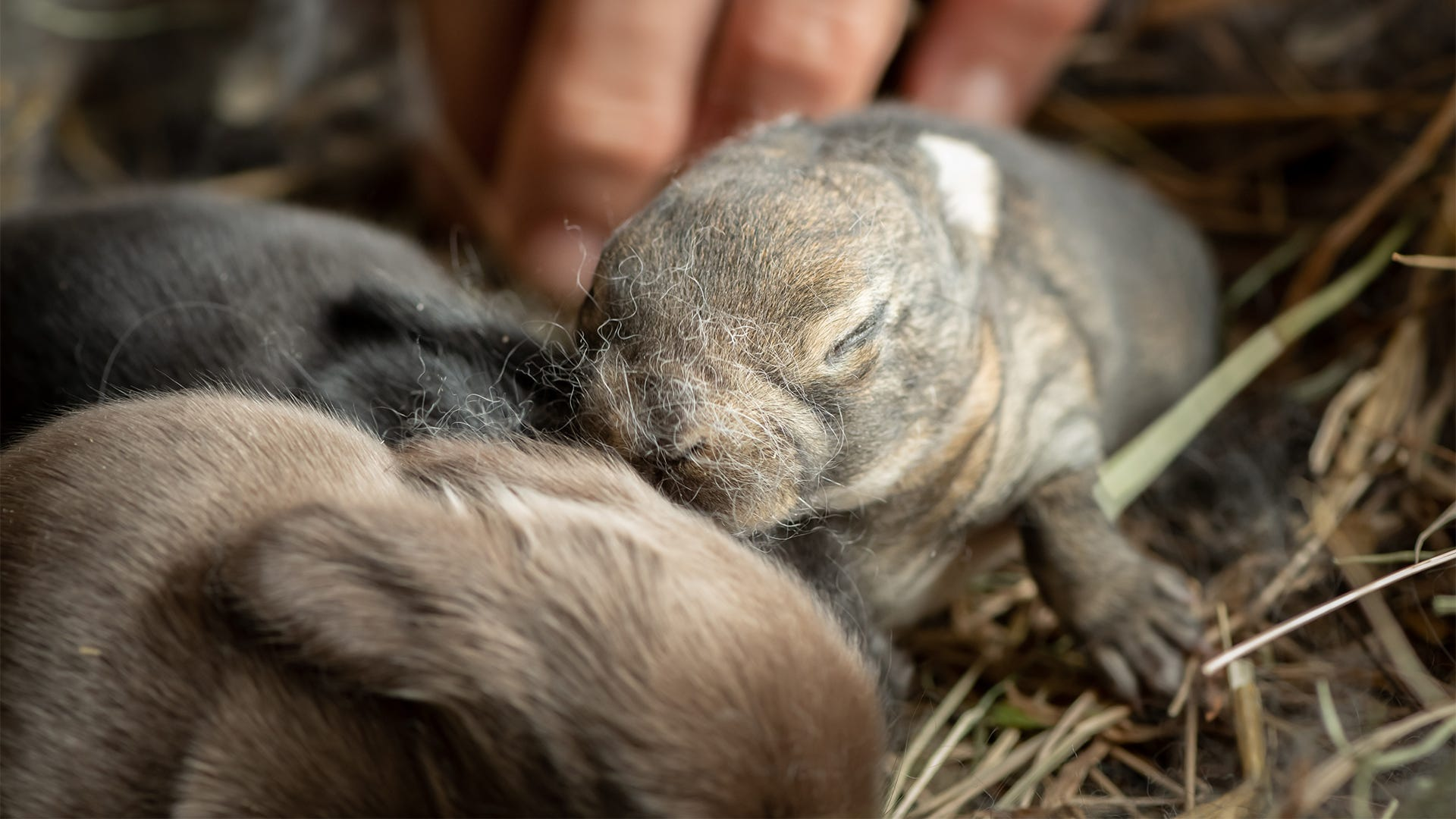 Found an Abandoned Baby Animal? Now What?