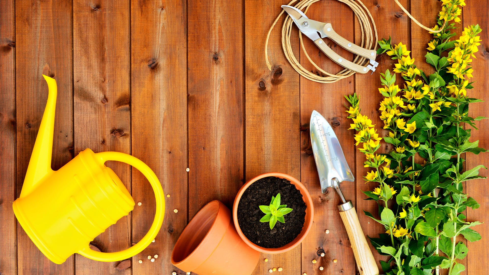 Gifts for Lawn & Garden Enthusiasts