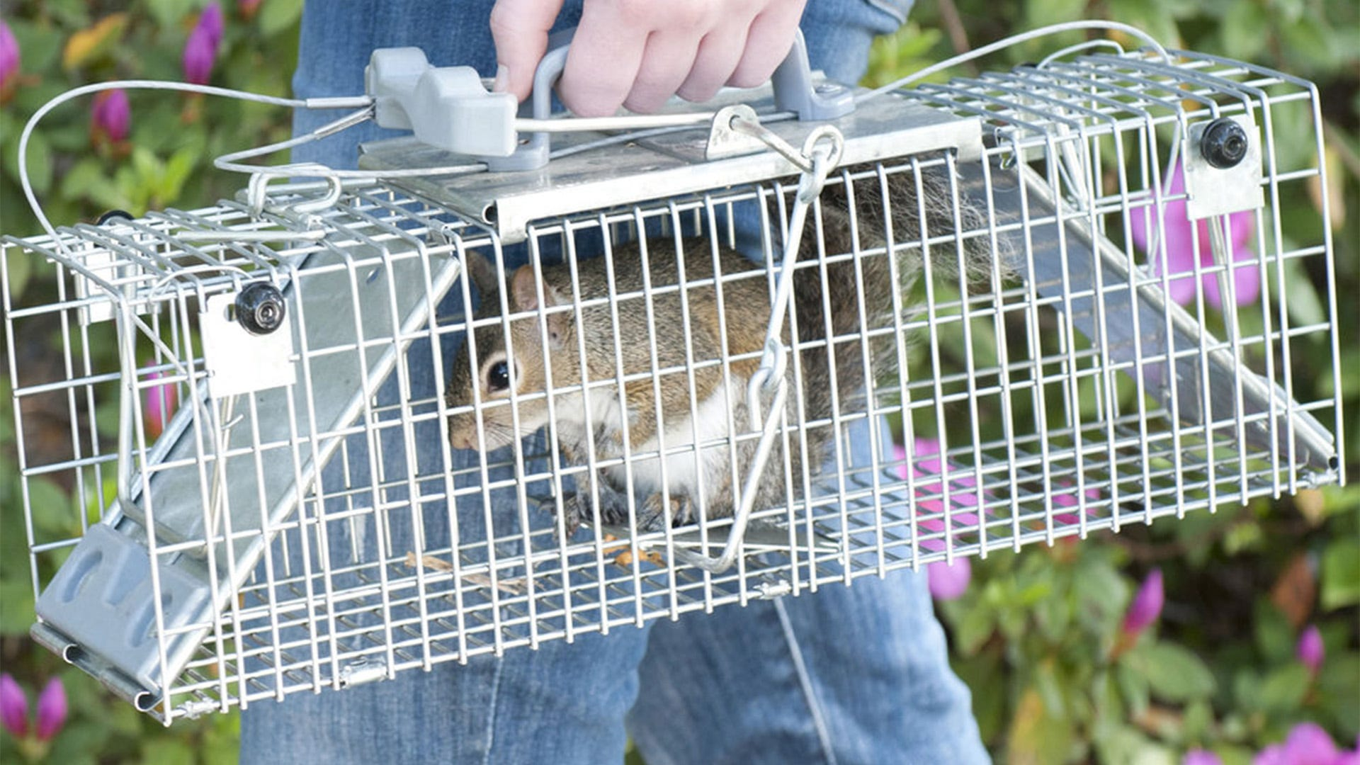 How to Make a Trap for Animals: Why Building Your Own Trap Is Not Effective