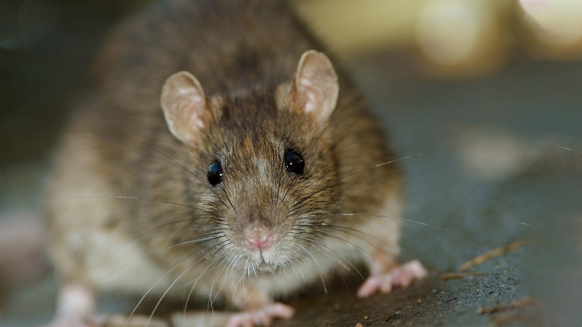 My 17 Years of Rescuing Rodents - Havahart's Wild Neighborhood