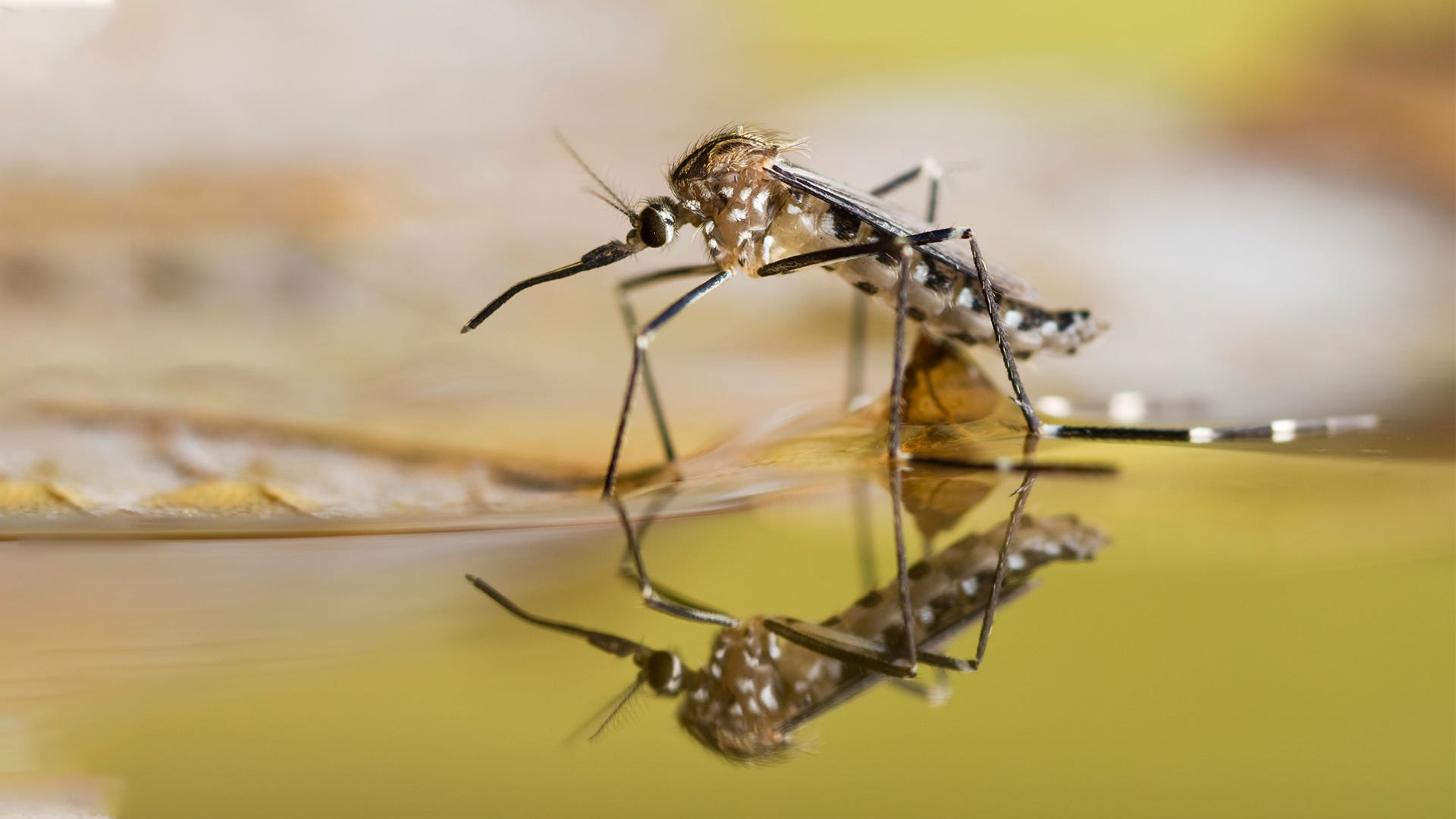 Keep Your Yard Mosquito Free