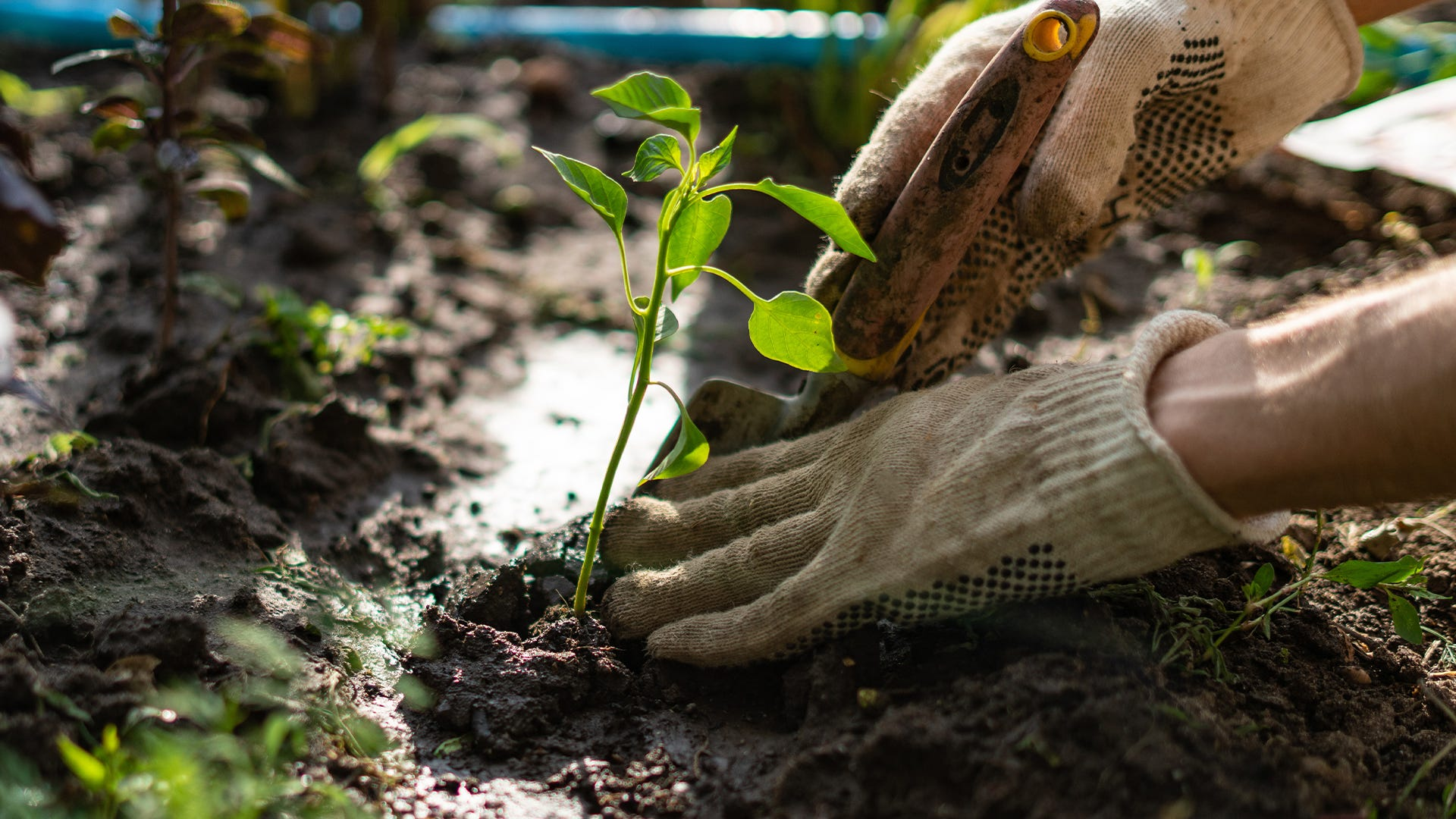 Organic vs. Natural: Defining Organic Classifications