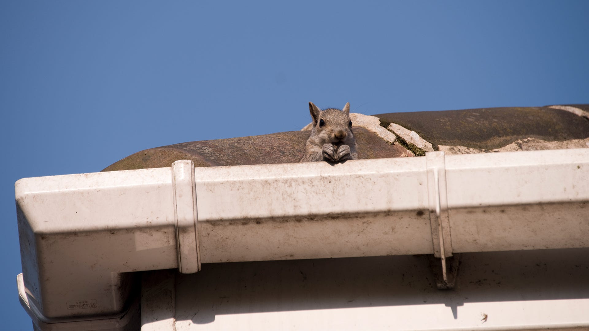 Tips from a Pro: Get Rid of Animals in Your Attic or Walls