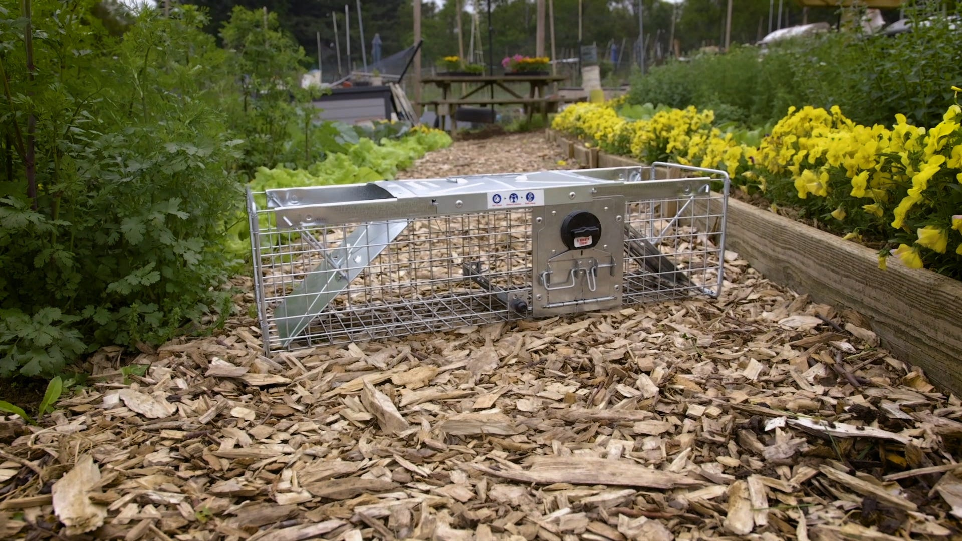 Top 10 Animal Trapping Tips from the Havahart® Community