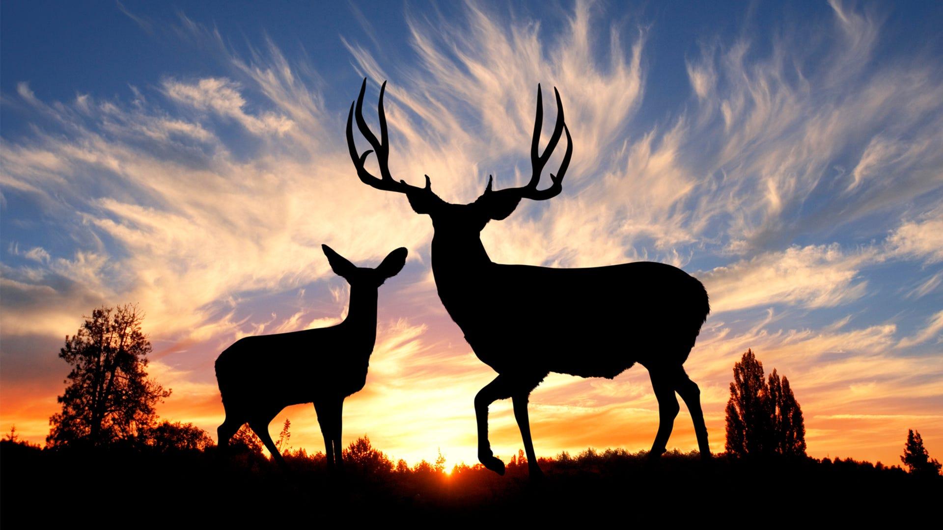 Why Do Deer Rub Trees?