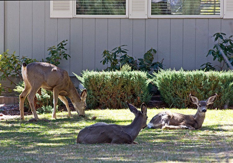 How to keep deer out of your yard
