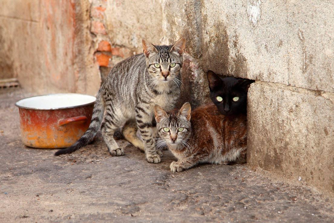 3 stray cats