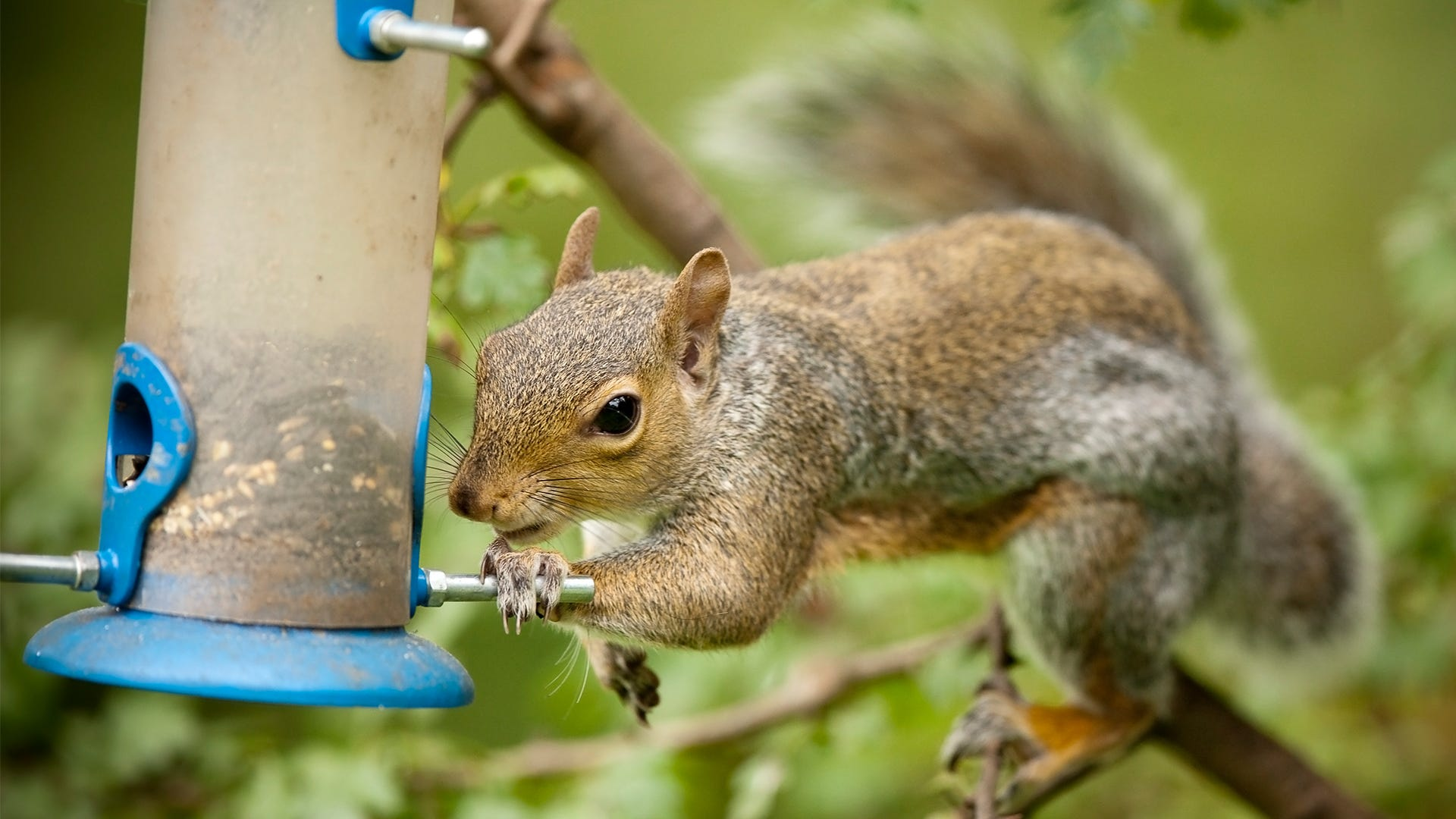 How to Protect Your Bird Feeders
